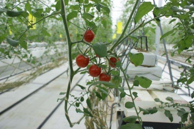 MARS Companyが須藤物産と業務提携。イスラエル製・植物工場向けAIシステムも導入