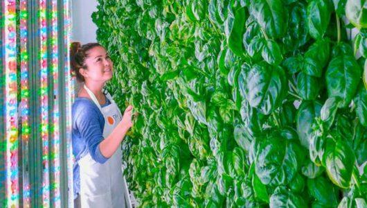 リクルート、米国の垂直式・植物工場ベンチャーPlenty社に出資