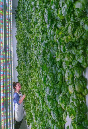 ソフトバンクなど、米国の垂直式・植物工場ベンチャーへ2億ドルを投資