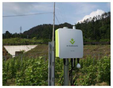サッポロ、自社ぶどう園にAI(人工知能)を導入 – 植物工場・農業ビジネスオンライン
