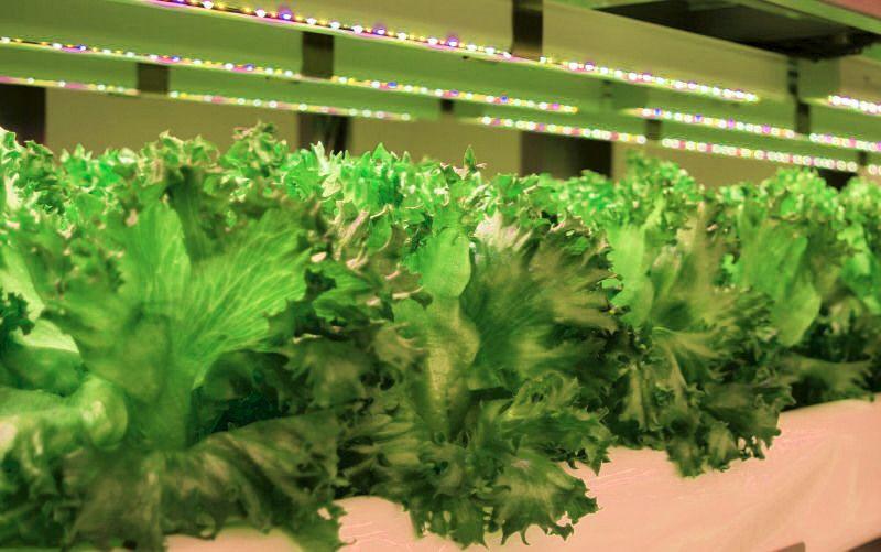 東洋紡、富山大と共同で植物工場での薬用植物の栽培研究を開始