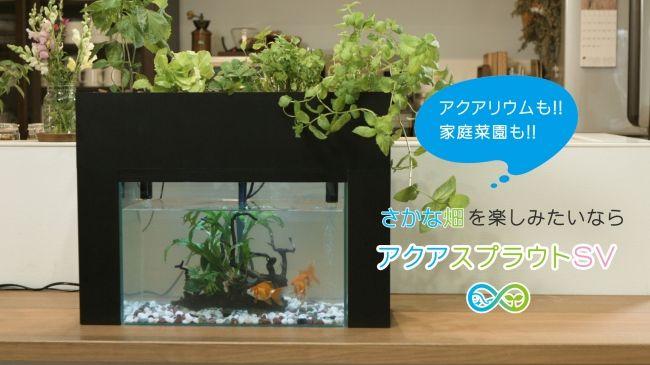 おうち菜園、さかなで野菜を育てる「さかな畑」家庭用キット。1万円の特別価格で販売