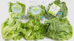 福井県美浜町「ノーマン」の植物工場、日本初のGAP・認定農業者へ