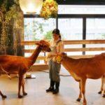 パソナグループ、「酪農」と「食育」を学ぶ『大手町牧場』を開設