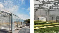 住友化学、シンガポールのビル屋上にて本格的な都市型農業モデルの実証試験を開始