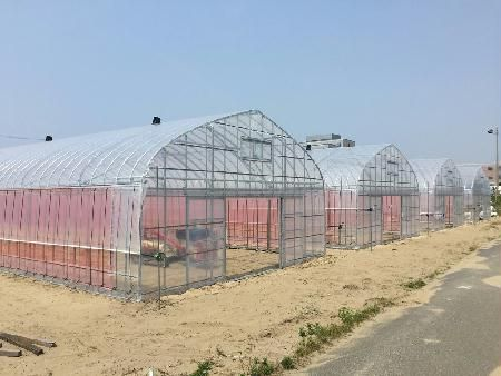 新潟県内初のユニット型植物工場による苗生産事業、環境制御型施設による高糖度トマトの生産開始