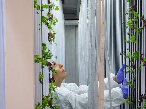 セント・ジョゼフズ大学、植物工場や食品加工など新技術開発や起業家の育成支援へ