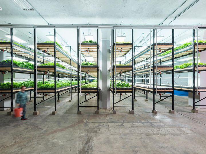 世界最大の閉鎖型・アクアポニクス植物工場が稼働。野菜はUSDA有機認証を取得