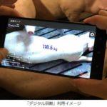 伊藤忠飼料とNTTテクノクロス、スマホ撮影で豚の体重を推測するアプリを共同開発