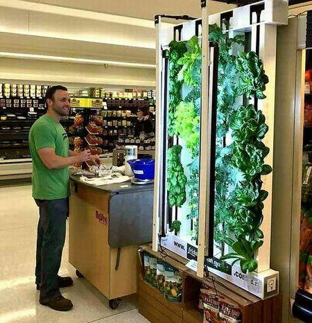 植物工場ベンチャーによる小売スーパー内の店産店消型モデル。タワー型水耕栽培を導入