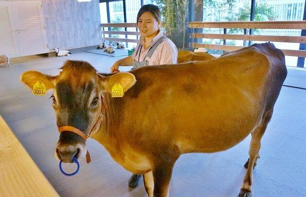 パソナグループ、「酪農」と「食」を学ぶ研修プログラム『大手町牧場学校』9月22日に開校