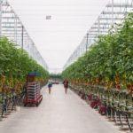オランダの植物工場技術をカタールへ導入、サステナブルな栽培方法で自給率向上へ