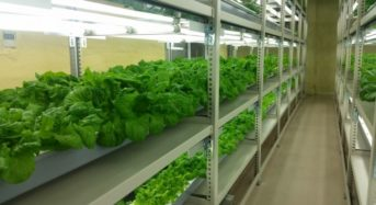 植物工場・エコデシック鹿児島ショールームを開設。栽培日数25日の世界最速のシステムを実現