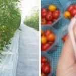 銀座農園による農業参入オールインワンシステム、温泉熱を利用した環境配慮型ハウスを稼働