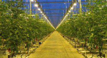 愛媛大と凸版印刷など、AIによる太陽光植物工場の実証研究を開始「人工知能未来農業創造プロジェクト」