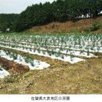 伊藤園、佐賀県で茶産地育成事業(新産地事業)を開始。耕作放棄地を専用茶畑へ