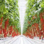 貧困・失業率の高いケンタッキー州南東部に、16haの太陽光利用型植物工場を建設
