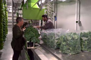 カナダの有名ケータリング会社の駐車場にてコンテナ型植物工場を設置