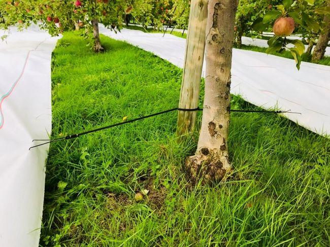 日本農業インコーポレイテッド、日本初のりんご用反射シートの販売開始