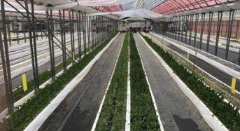 豆蔵HD、障がい者雇用促進のための 「豆蔵ファーム」を千葉・柏市で開園