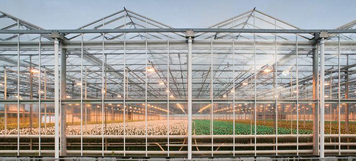 都市農業技術で世界の先端を行くオランダ。AVFサミットから考える持続可能な農業④