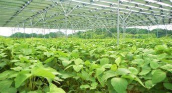 千葉エコ・エネルギーなど、ソーラーシェアリングと農泊を進めるJV「エコトラスト合同会社」を設立