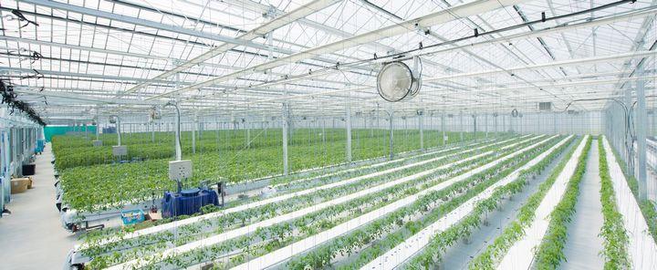 テラスマイル、門川町高糖度トマト部会に農支援サービス「RightARM」を導入