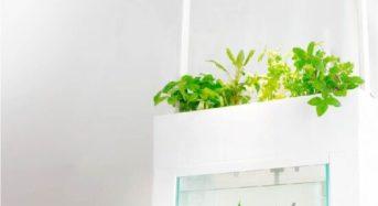魚が育てる!? 有機野菜とハーブの栽培キット「アクアスプラウトSV さかな畑」販売開始