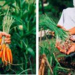 ザ・リッツ・カールトンバリ、地元産の食材を農園からテーブルまで・料理教室を開催