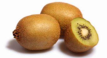福岡銀行などの農業ファンド、キウイ生産のニューガイアアグリへ出資