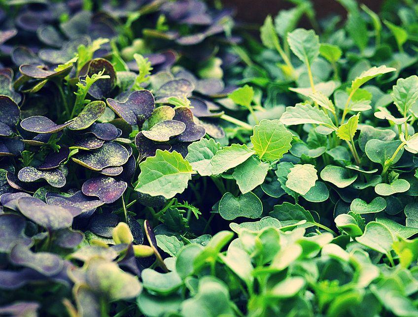 UAEドバイ初の商業ベース・閉鎖型の植物工場が本格稼働