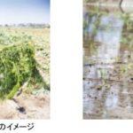 JTBコーポレートセールス、農業ベンチャーFARMFESと協業。地方の耕作放棄地の企業向けレンタル事業を開始