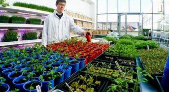 植物工場・アクアポニクスを運営するアイルランドの学校にて、今年から都市型農業プログラムが正式採用