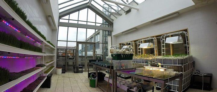 アイルランド中高生「植物工場・アクアポニクス」の屋上ファームを運営