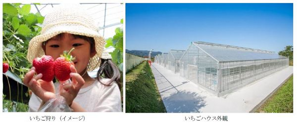 大和ハウス、京都府内・最大級のホテル併設型いちご農園をオープン