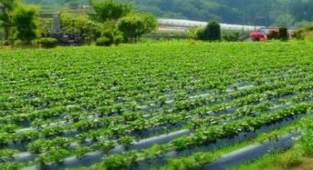 ワタミファーム臼杵農場(大分県)にてJGAP認証取得。全国12か所の農場・牧場での認証取得を目指す