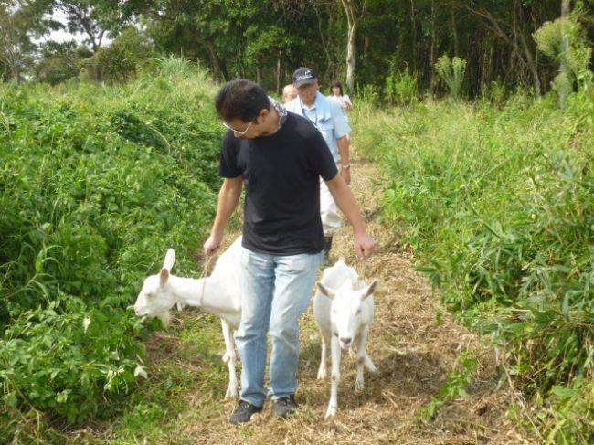 ブラザー工業、ヤギによる「エコ除草」を実施。草刈り時間を4分の1に短縮