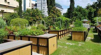 シンガポール、住民参加型のコミュニティー・ガーデンが新たにオープン