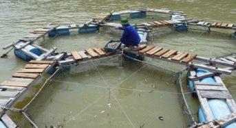 ベトナムの水産輸出目標は90億ドル。エビ、白身魚パンガシウスの養殖技術の向上も