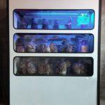 米国ベンチャー「Smallhold」キノコ栽培に特化した小型の植物工場ユニットを提案