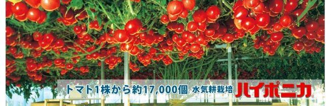 協和「水耕栽培キット」がアメリカKickstarterにて資金調達。海外市場へ