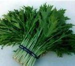 近鉄、奈良・伝統野菜「大和野菜」を楽しむツアーを高校生がおもてなし