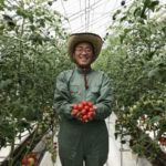 石川県内スーパー・モアショップヤマモト、養液土耕による植物工場にてトマト栽培
