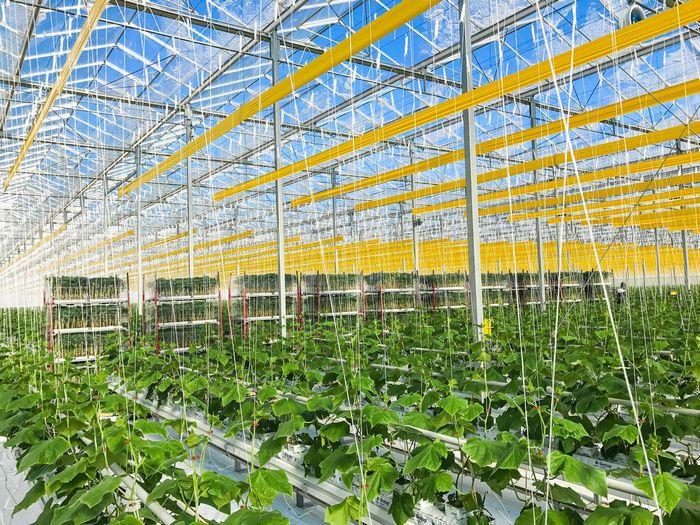 カナダの植物工場企業が米国ジョージア州に拠点を移転。30haの巨大生産施設を建設