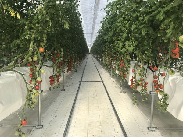 段ボール・梱包材製造の三共木工、養液土耕の太陽光利用型植物工場を建設