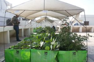 インドにおける都市型農業ベンチャーの台頭。有名大学卒の起業家たちも「10億ドル市場」を狙う