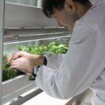 パートナーエージェント、障がい者雇用型植物工場を利用