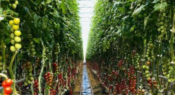 AppHarvest社が約63億円の資金調達に成功。太陽光利用型植物工場を建設