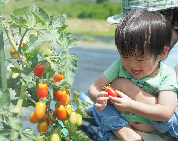 アグリメディア「シェア畑」新規開設を強化、来年度内90農園体制へ