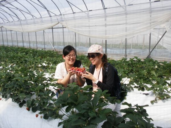 JTBの食・農×観光ブランド事業、春節期間に京都産いちごの体験企画を実施